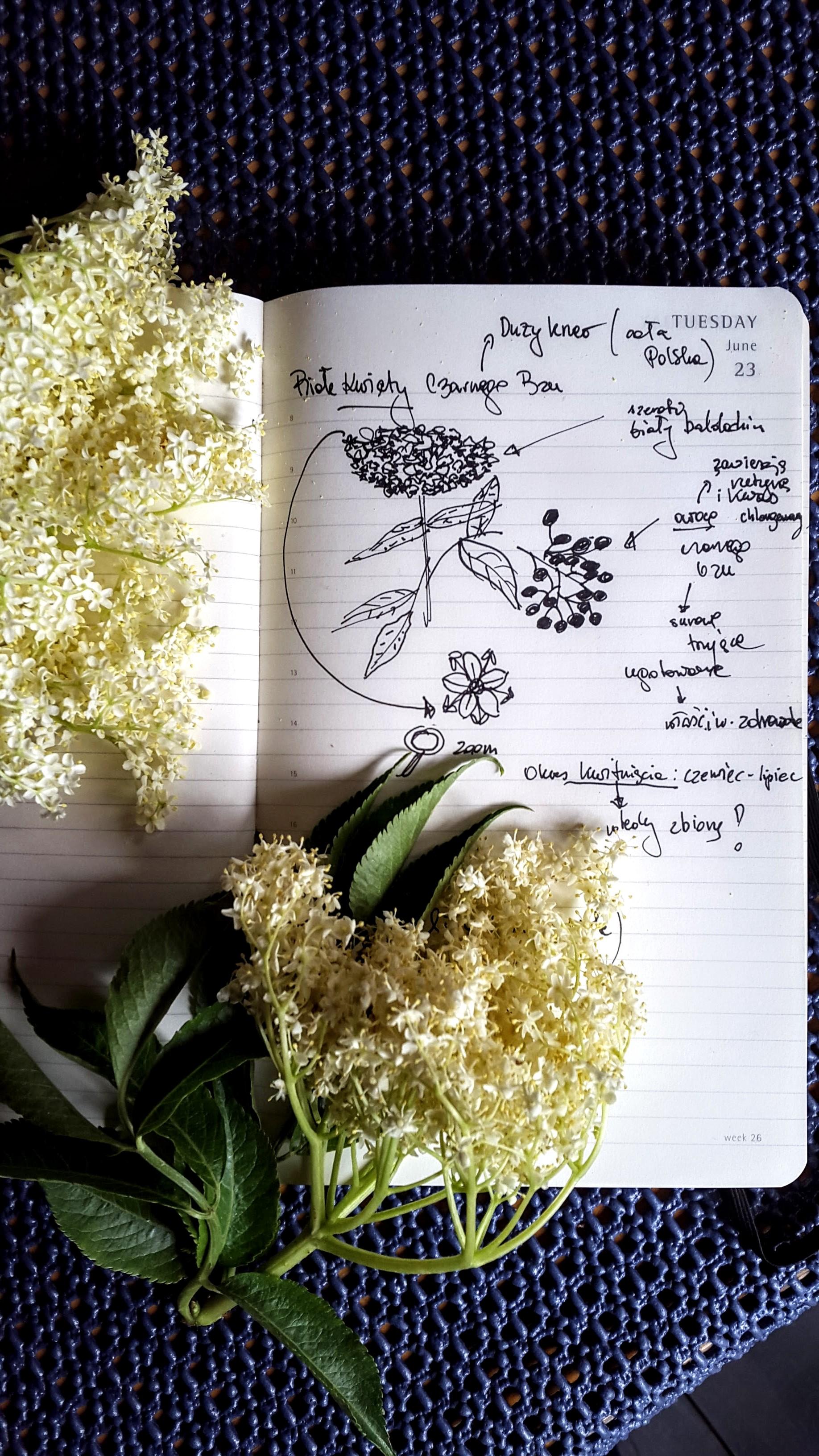 Awczerwcu syrop zkwiatów czarnego bzu